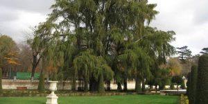 arbol 1 300x150 - Parque de El Retiro