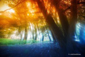 fotografia hecha con vaselina 300x201 - Ideas Originales Para Fotografía