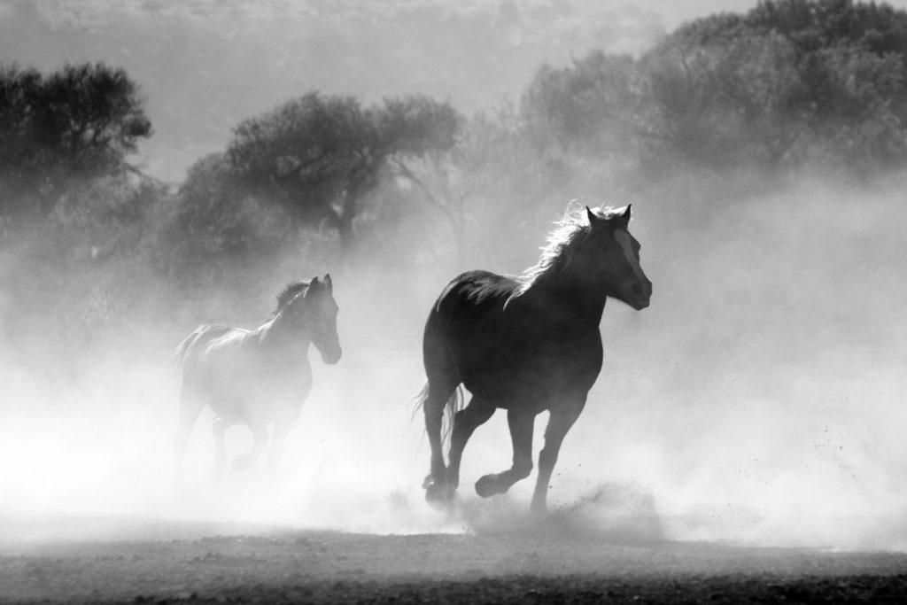pexels pixabay 52500 1024x683 - Fotografía En Blanco Y Negro